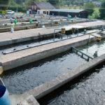 Les avantages d'une entreprise de pisciculture aux USA