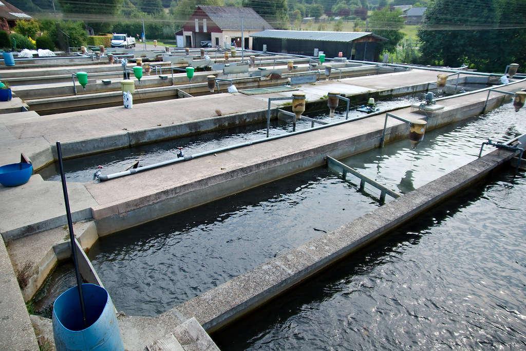 Bassin de Pisciculture